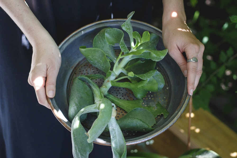 person holding round gray pot with green leaf plant inside