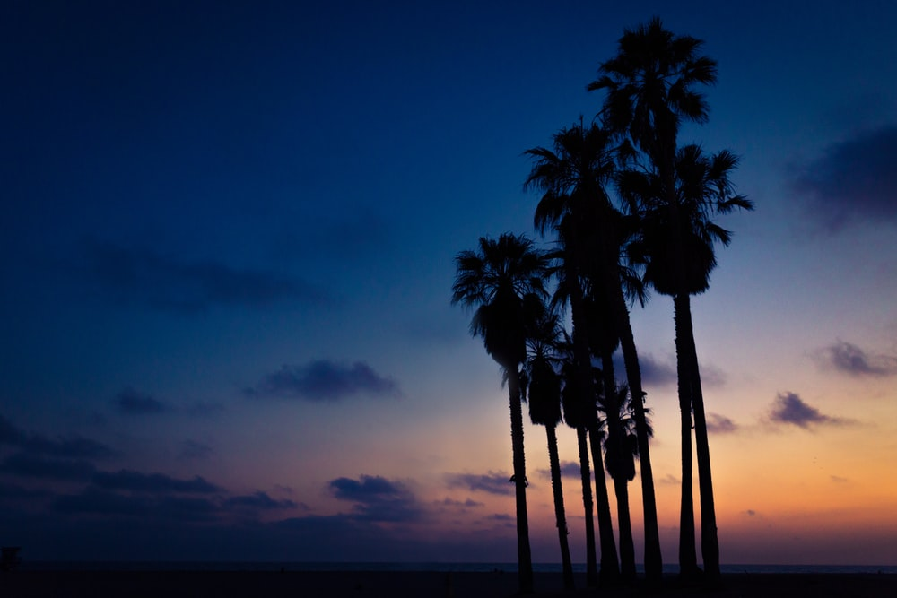 silhouette of Mexican palm trees under orange, blue, and white cloudy skies