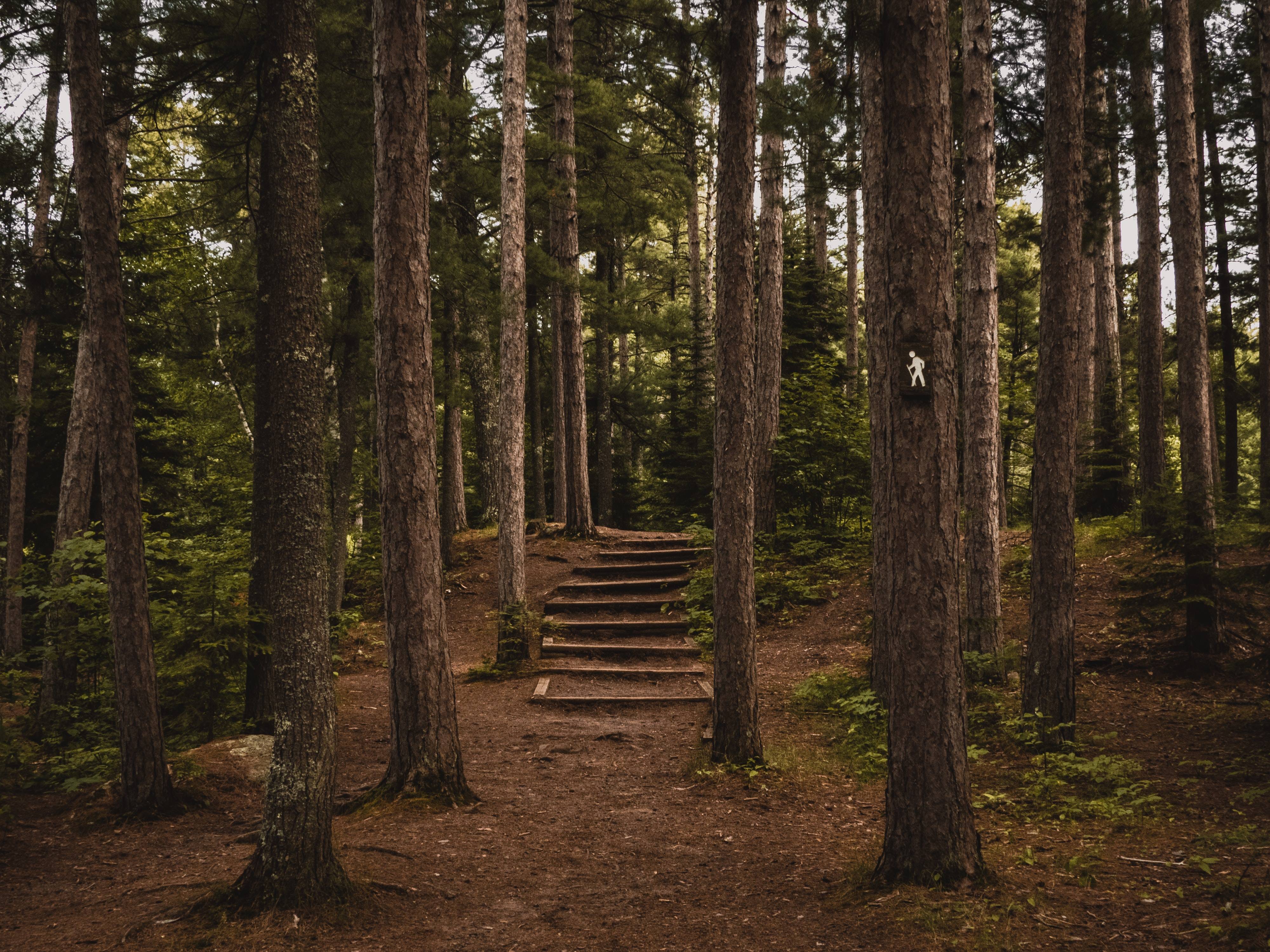 Wooden steps in an evergreen forest