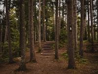 brown wooden trees beside pathway