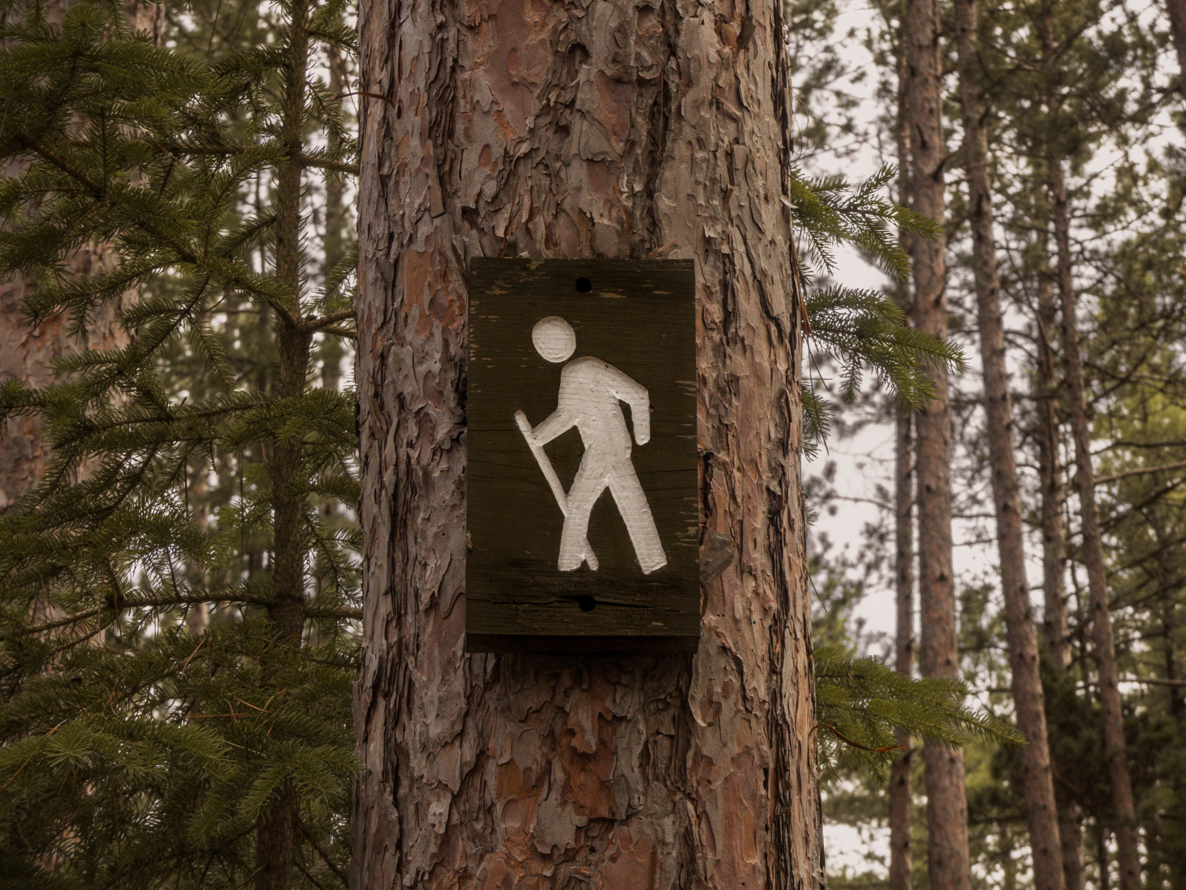 road signage on tree bark