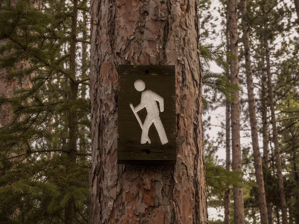 road signage on tree bark
