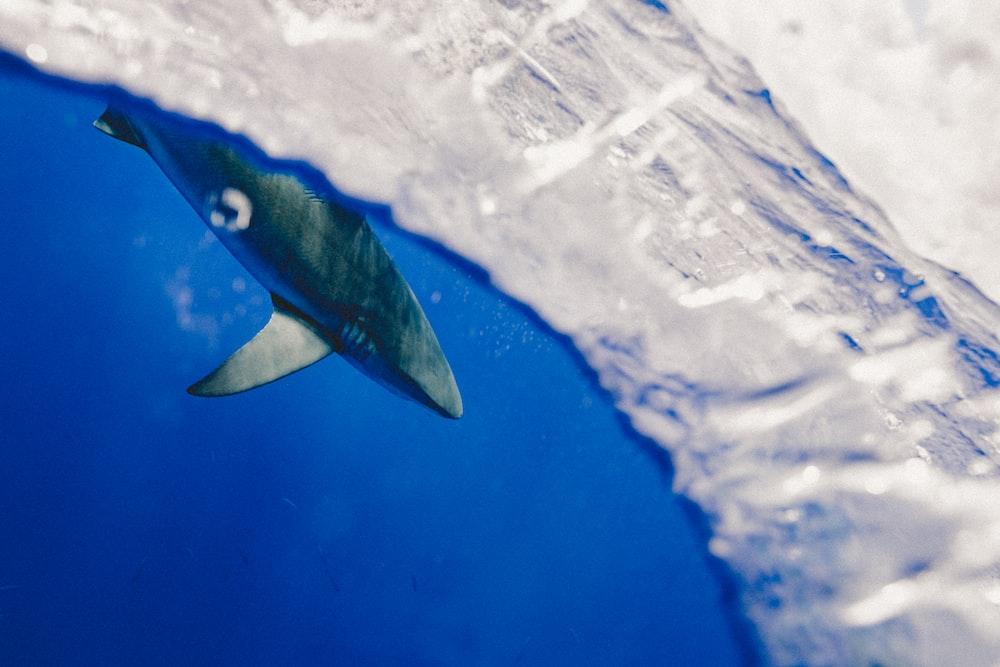 selective focus photography of gray shark