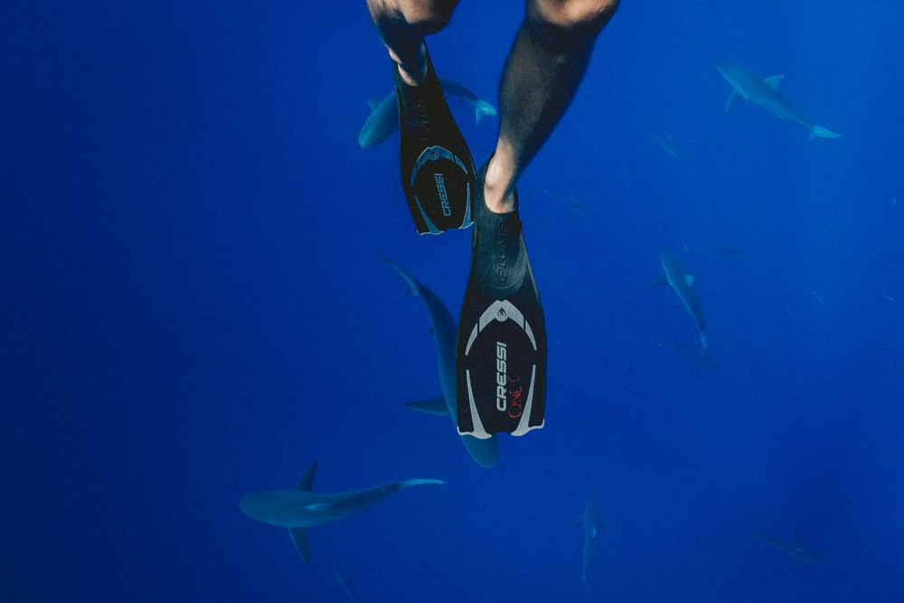 person wearing black diving flippers swimming above school of sharks underwater photography