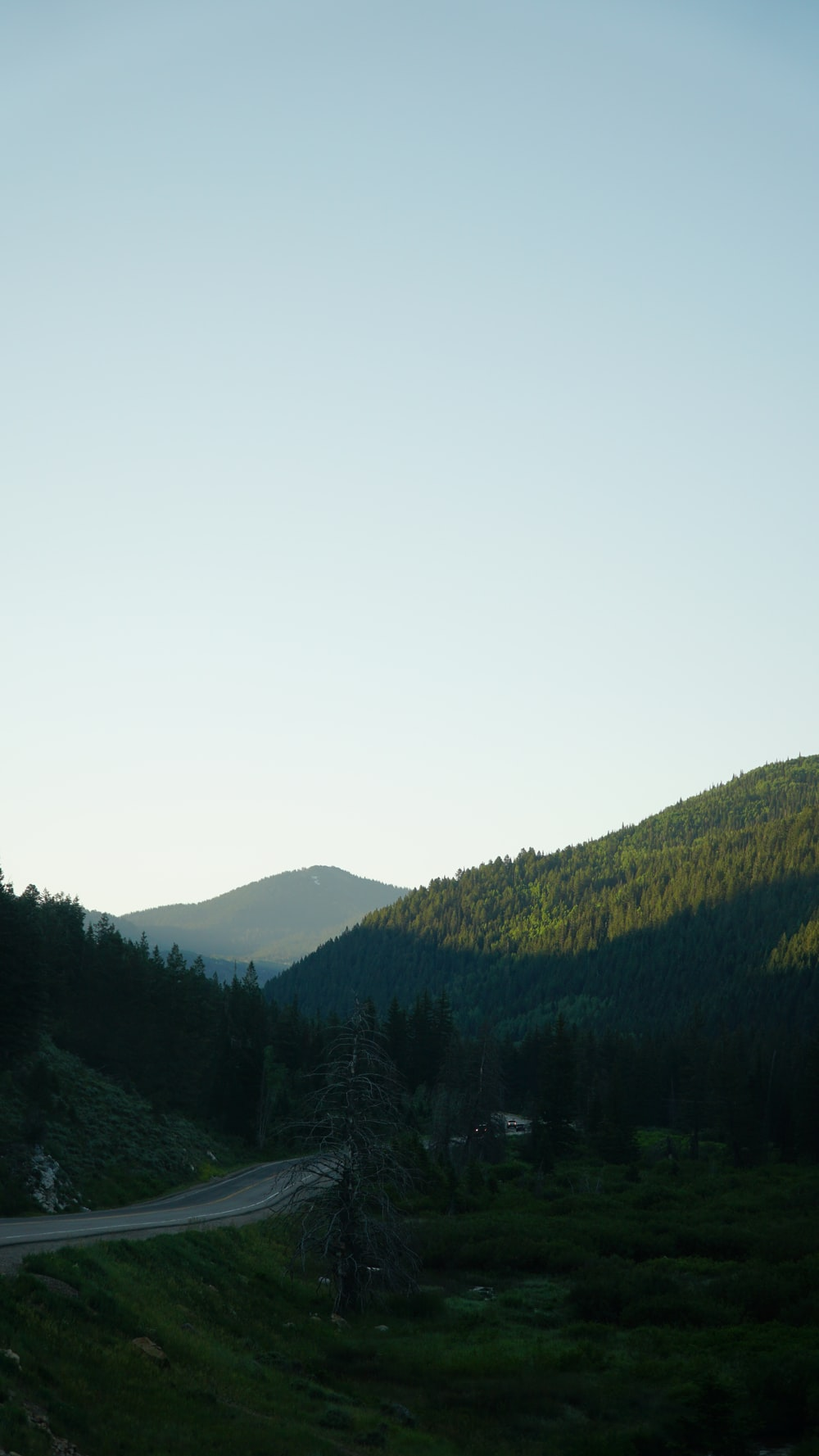 mountains covered with trees