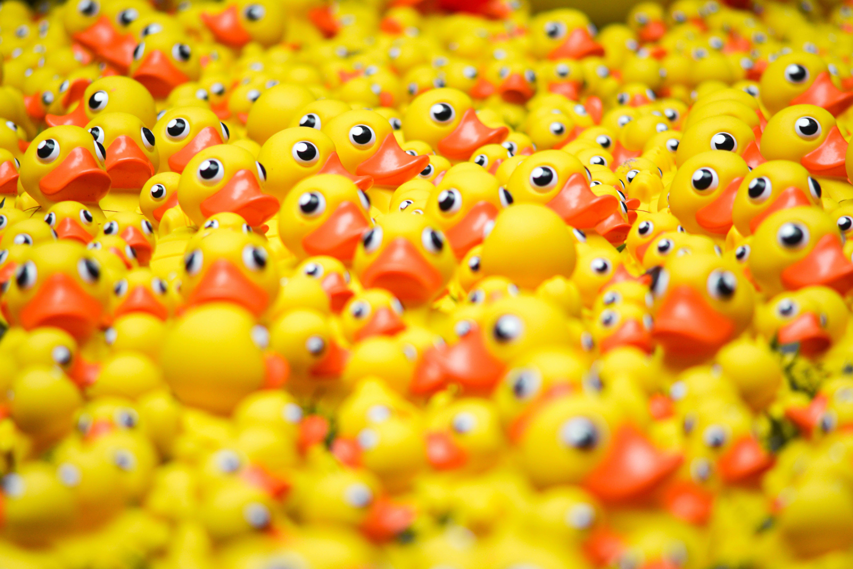 plein de canards de bain, notion du pluriel