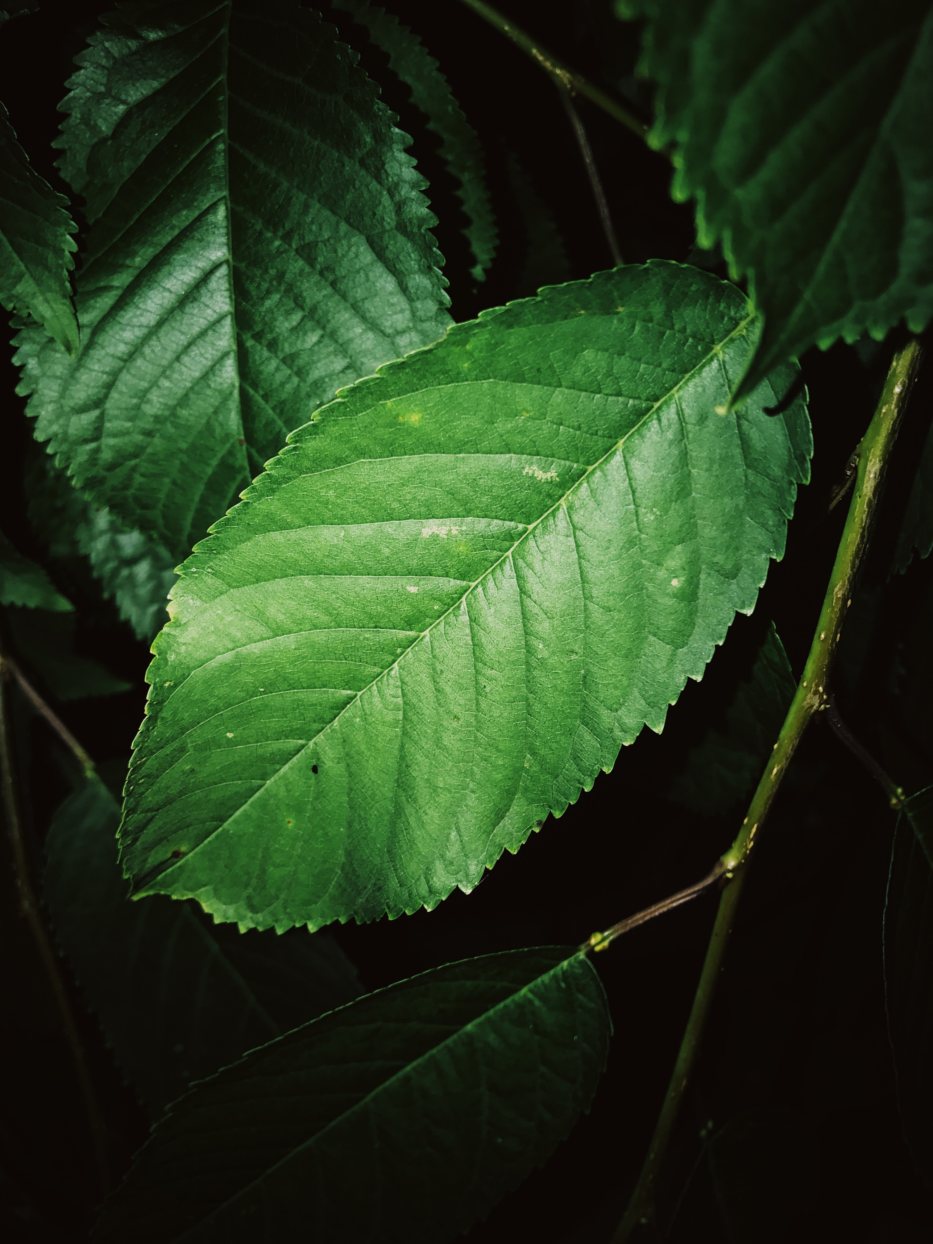 closeup photography of green leaves