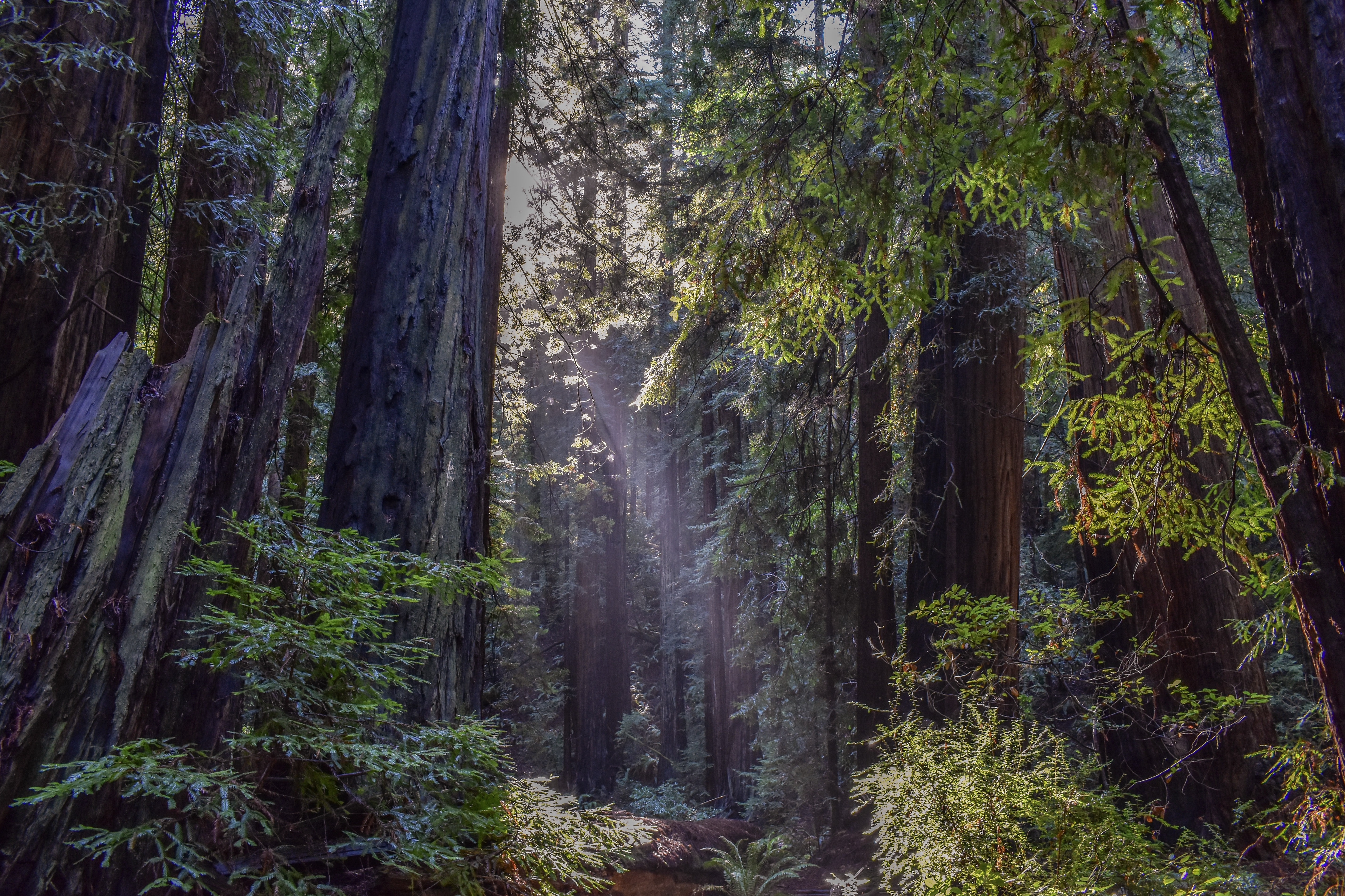 A clearing in an evergreen forest illuminated by sunlight breaking through the canopy