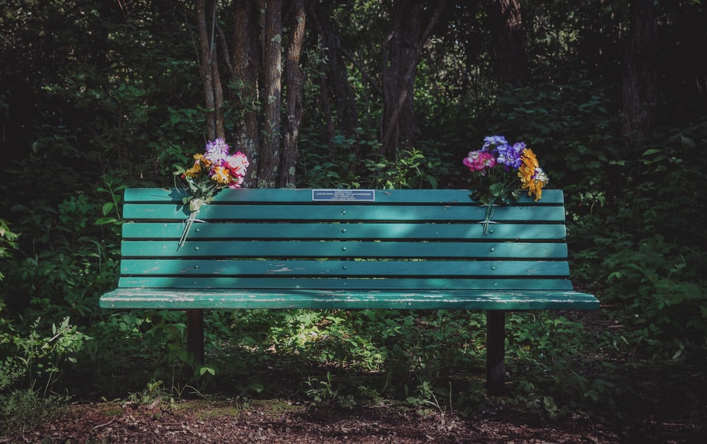green wooden bench and flowers at daytime