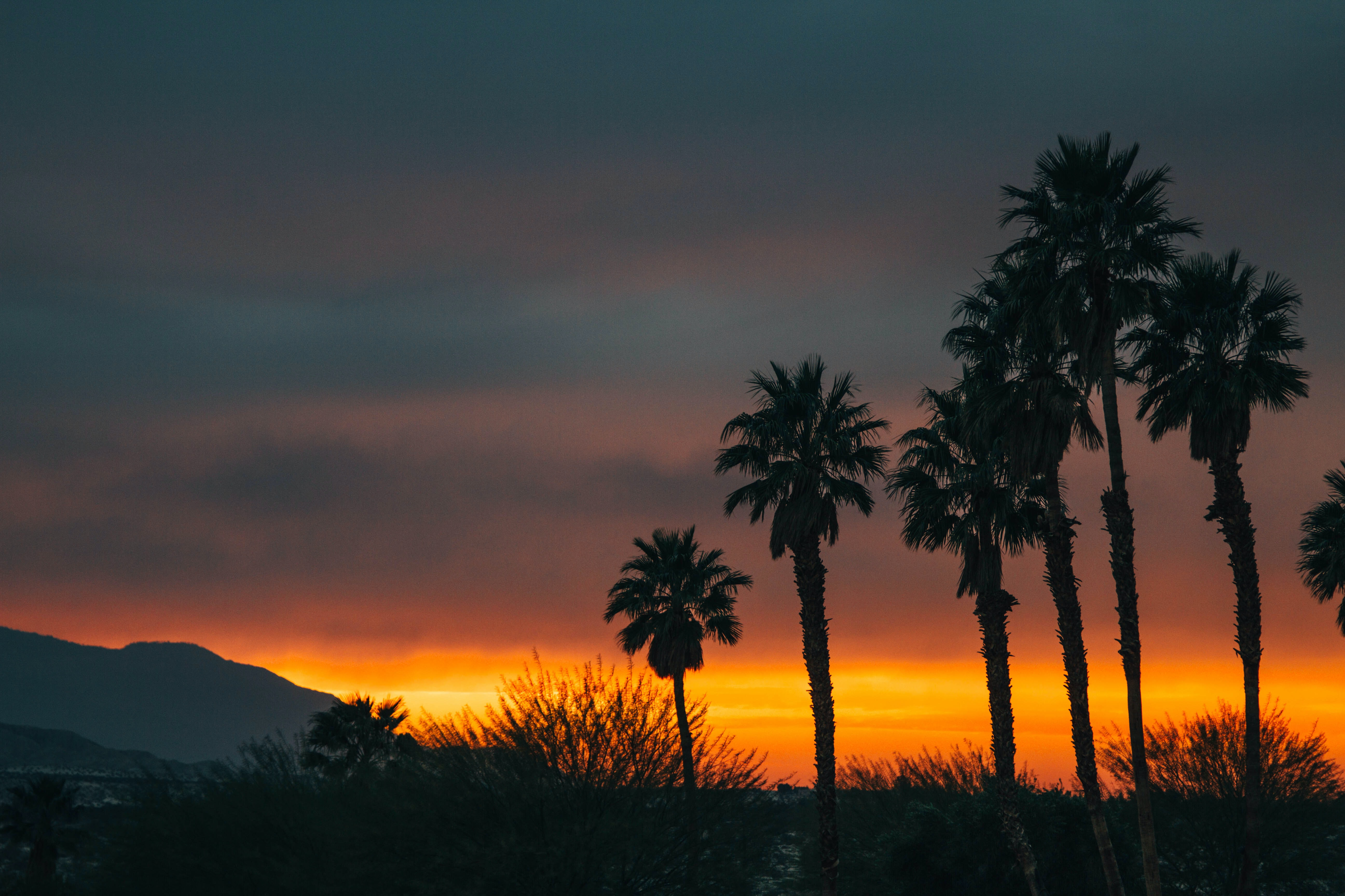 Silhouette palm trees and bushes at dawn-or-dusk with a hill in the distance and an orange sky and cloud cover