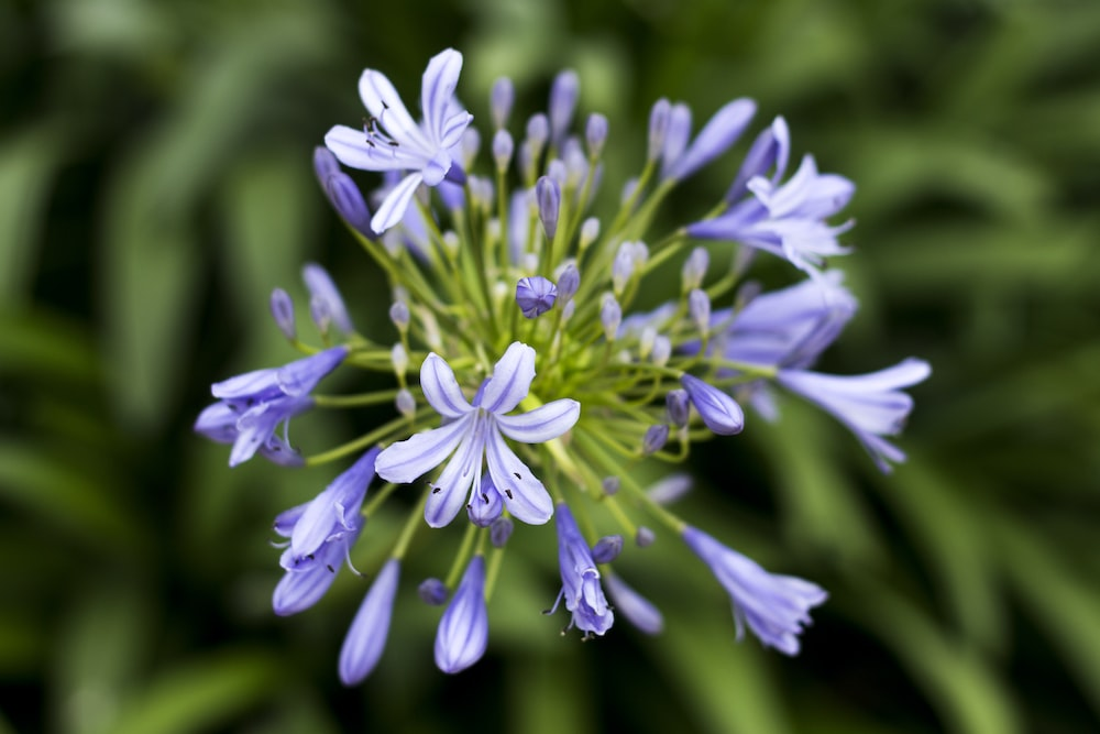 blue leafed flower with green leaves
