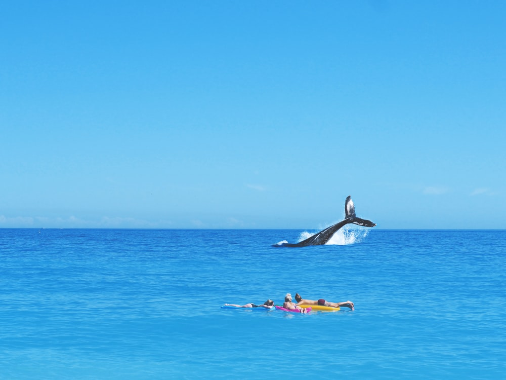 three person watching whale on beach