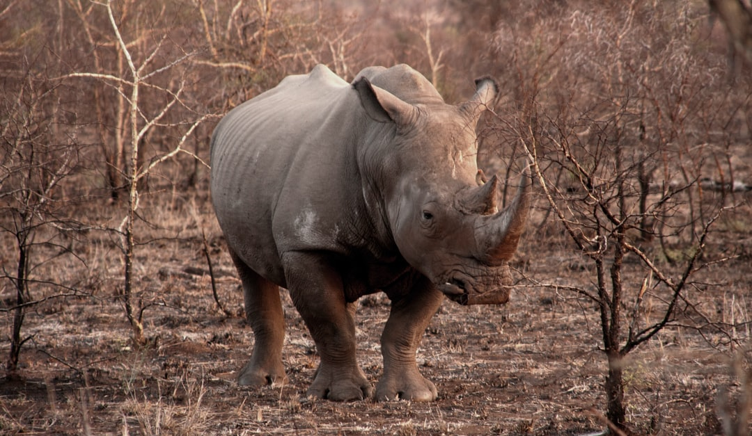 My most favourite animal from my Kruger experiences.