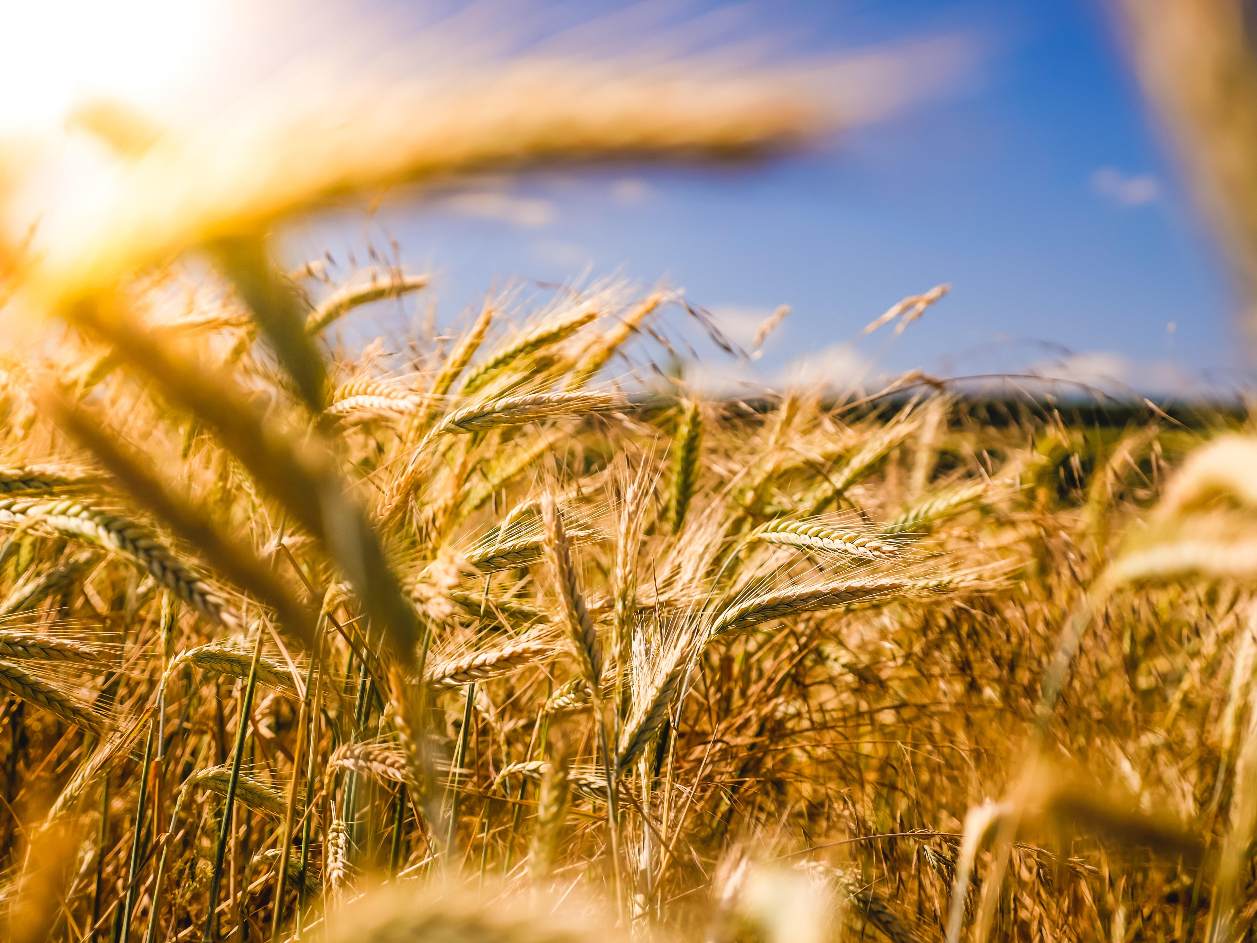 Farming and Big Data