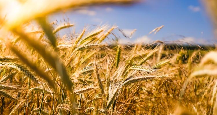 Funding your crop farm