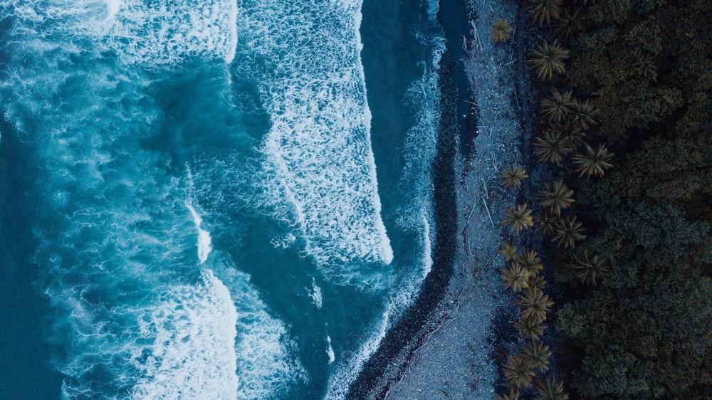 ocean waves near forest