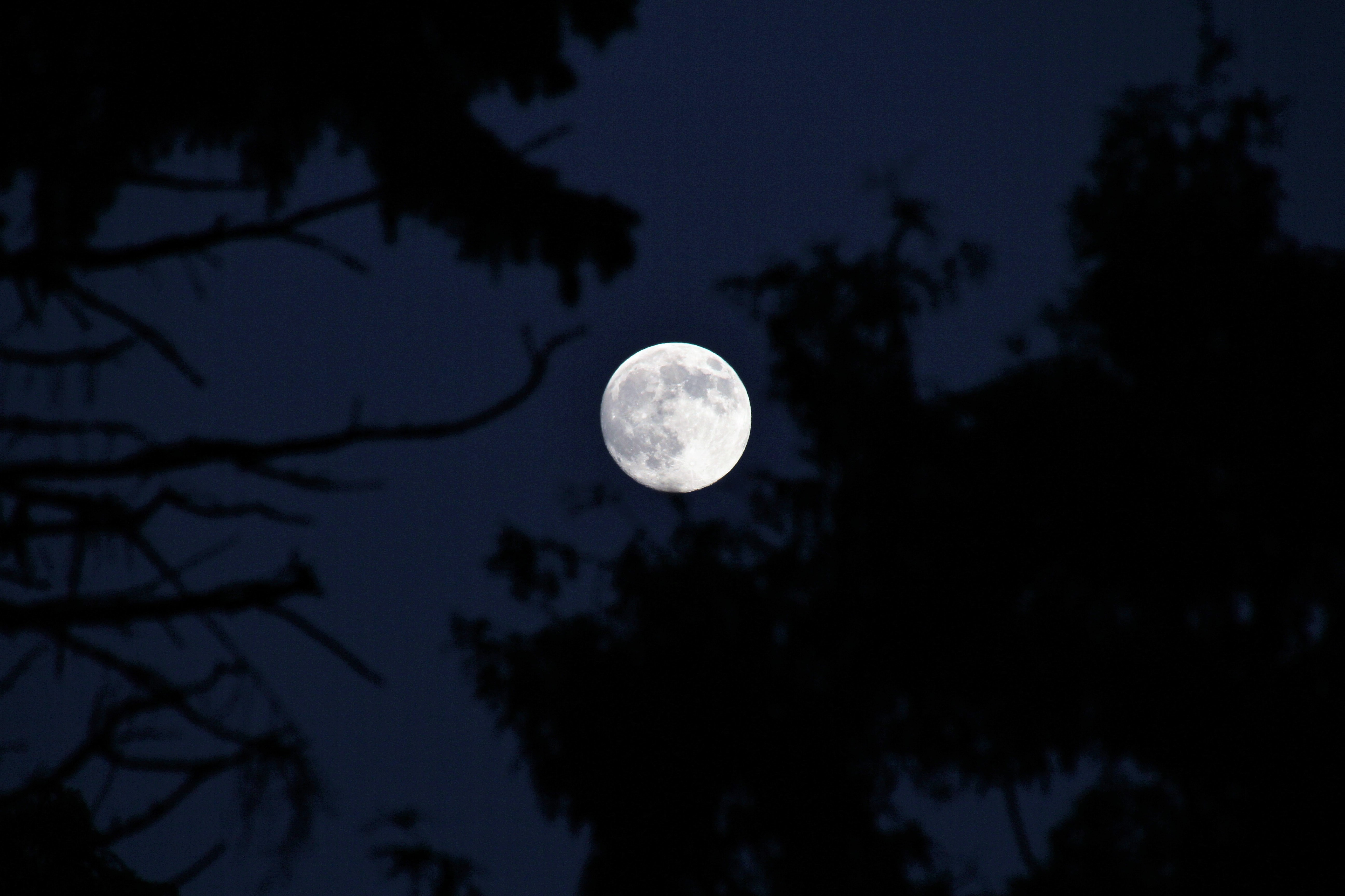 The full moon is seen through branches silhouetted against the night sky