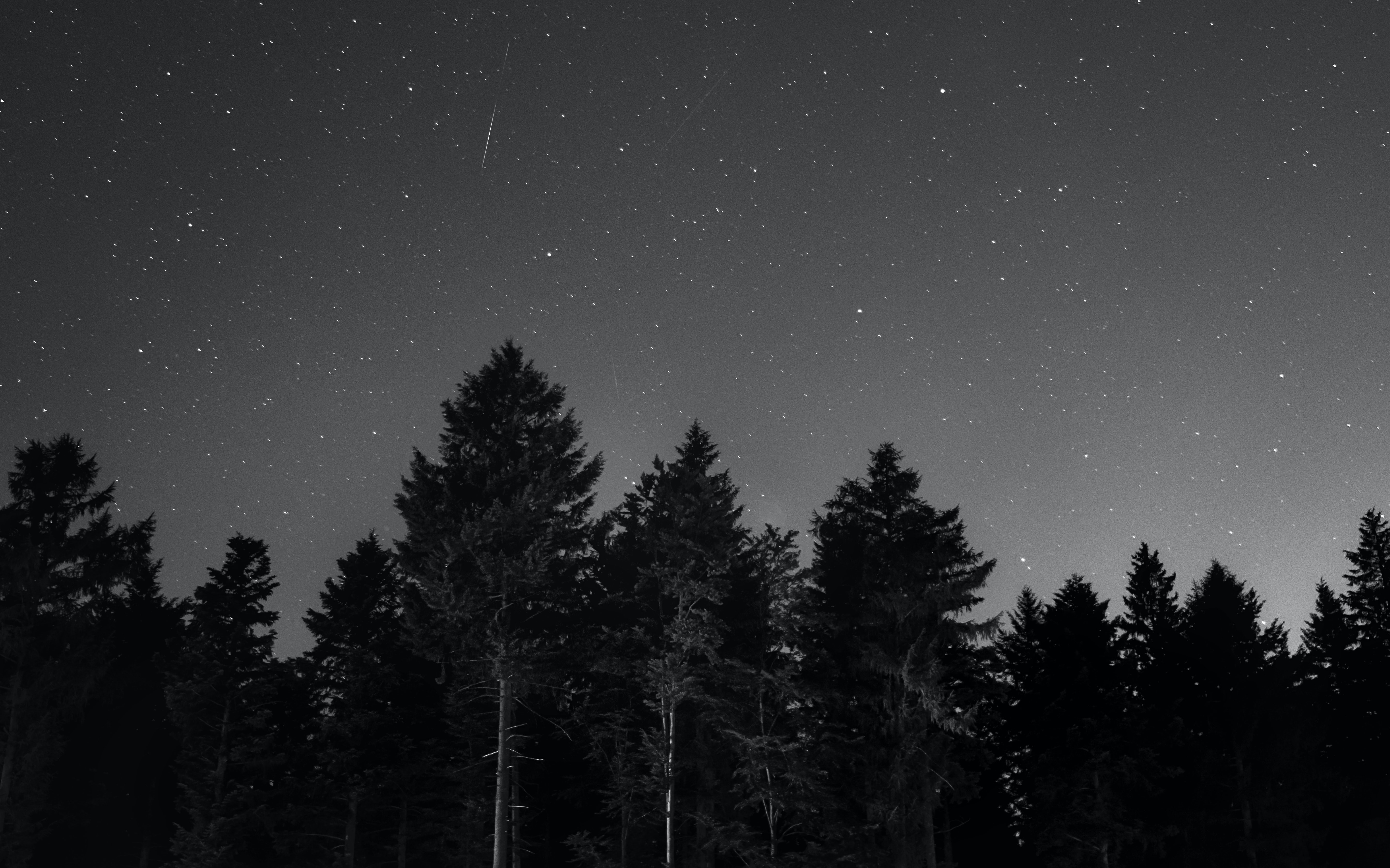 A black-and-white shot of a shooting star on the night sky over an evergreen forest