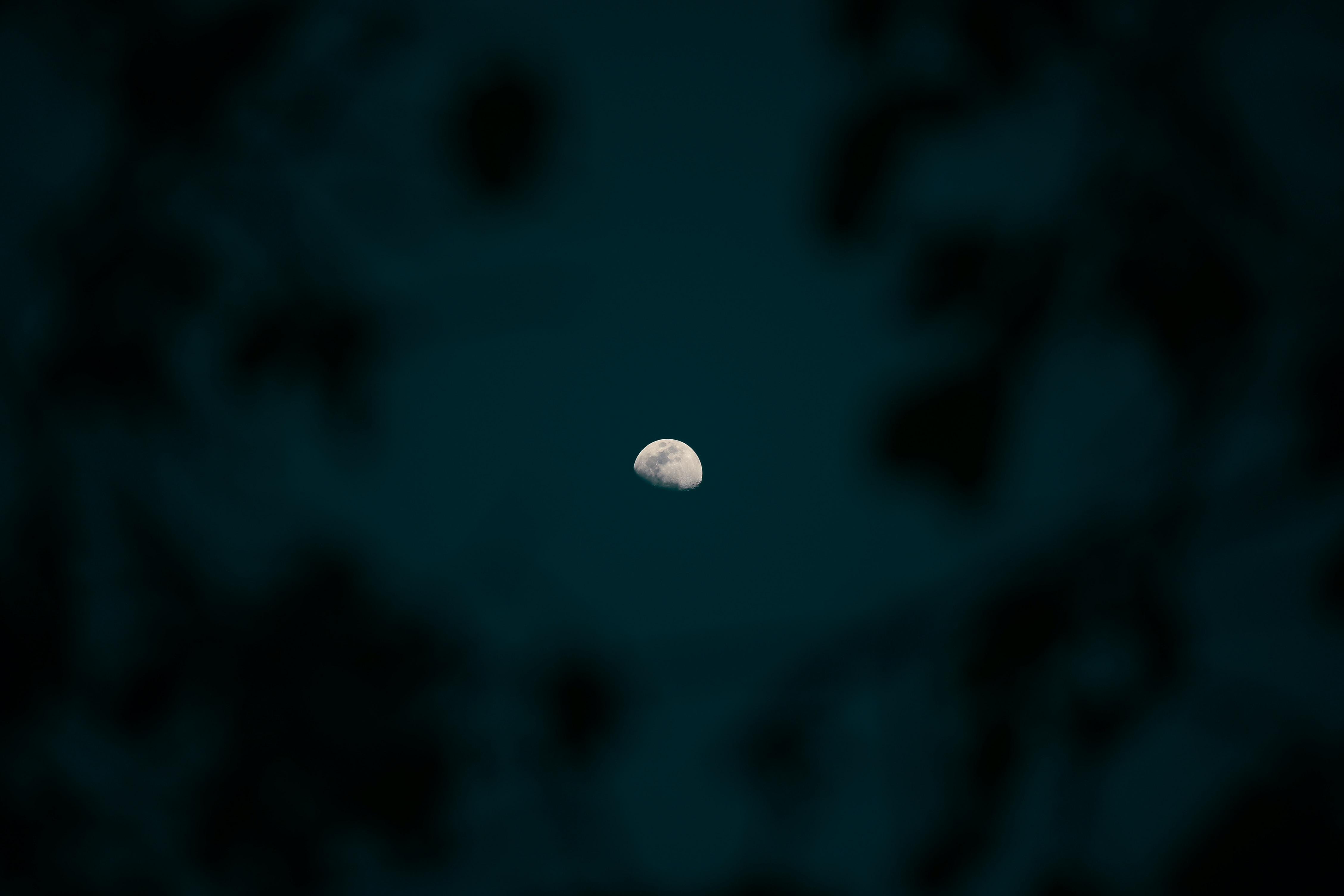 The half moon visible through a net of branches