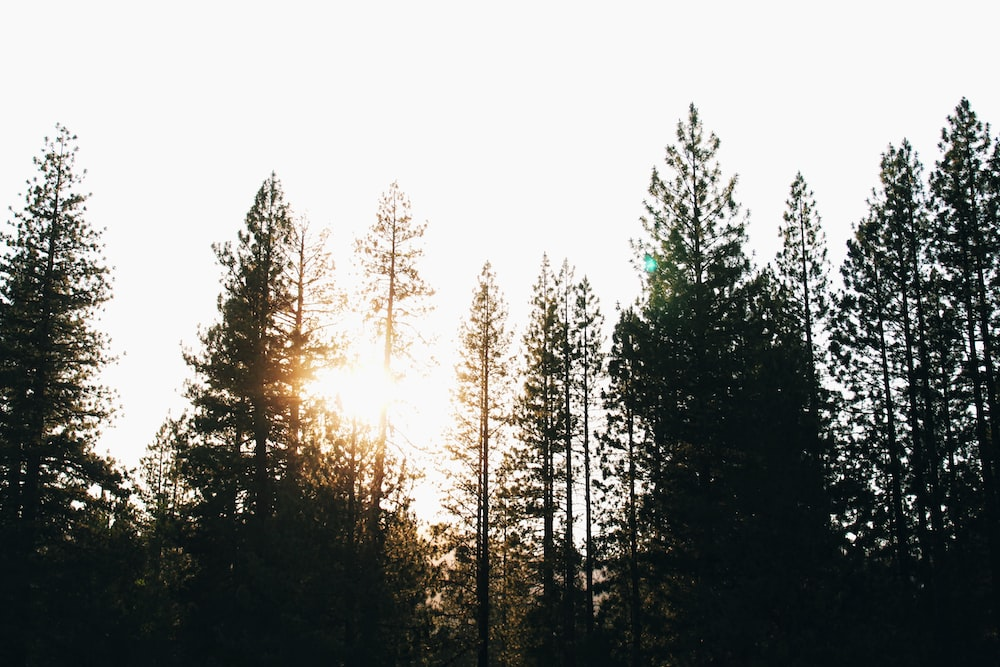 silhouette of trees at daytime