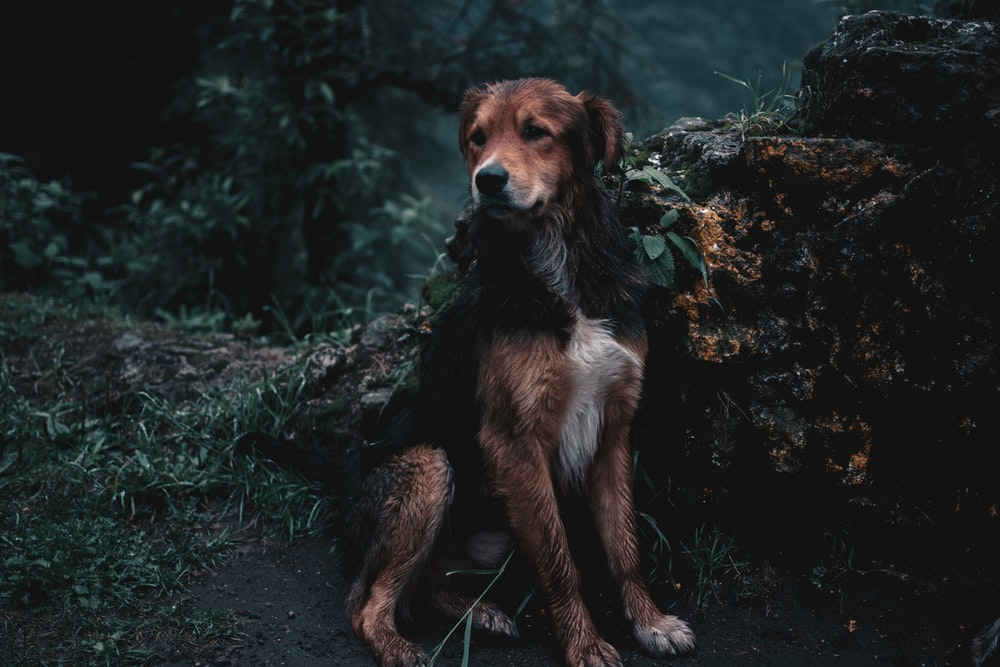 brown and black dog sitting on ground