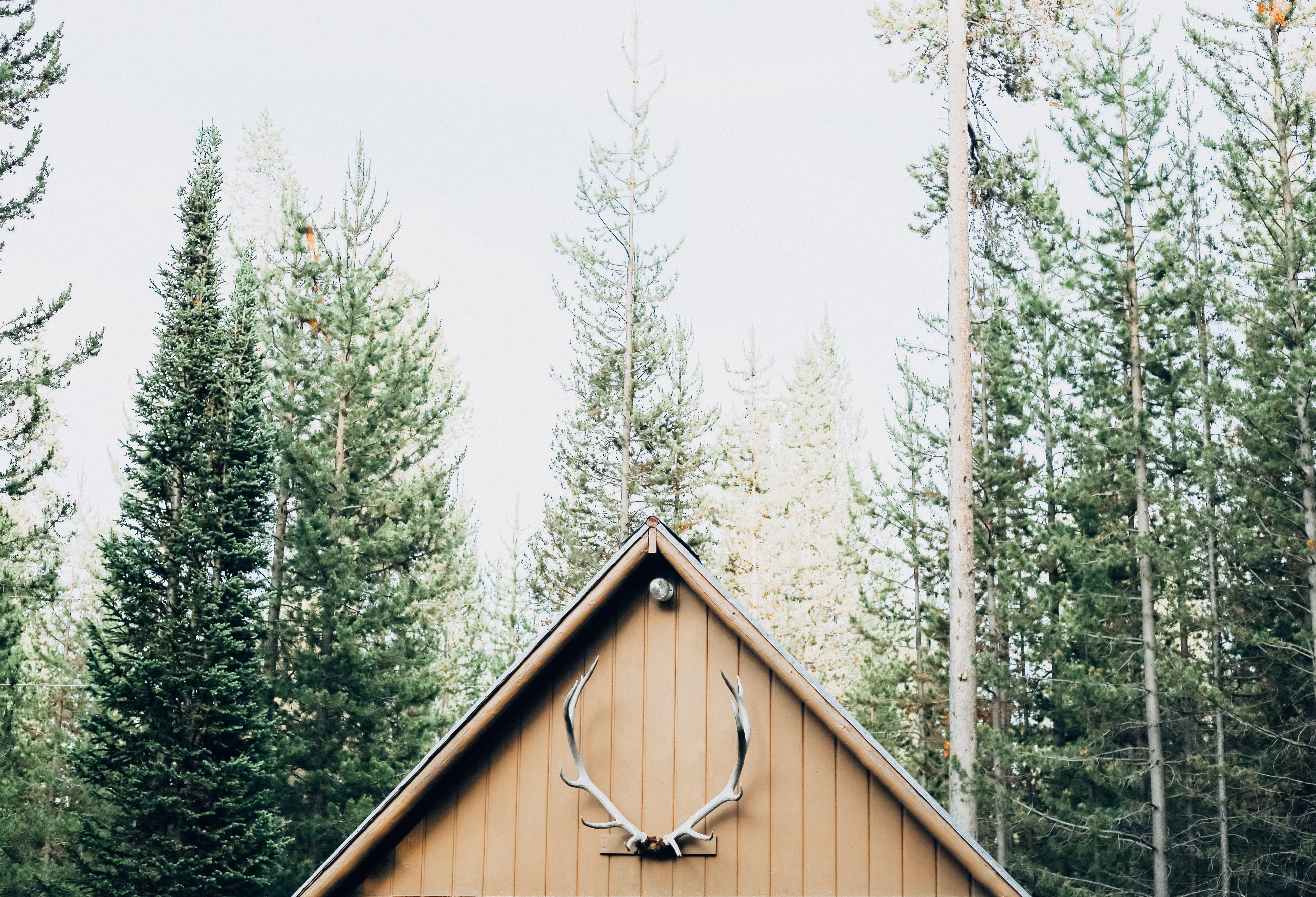 A cabin roof with an antler is seen in the pine forest in Island Park.