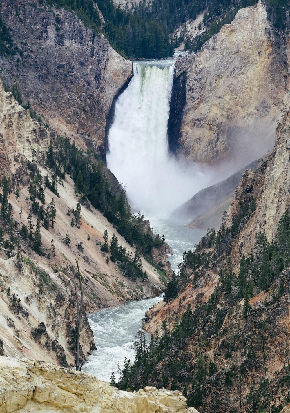 trees near waterfall
