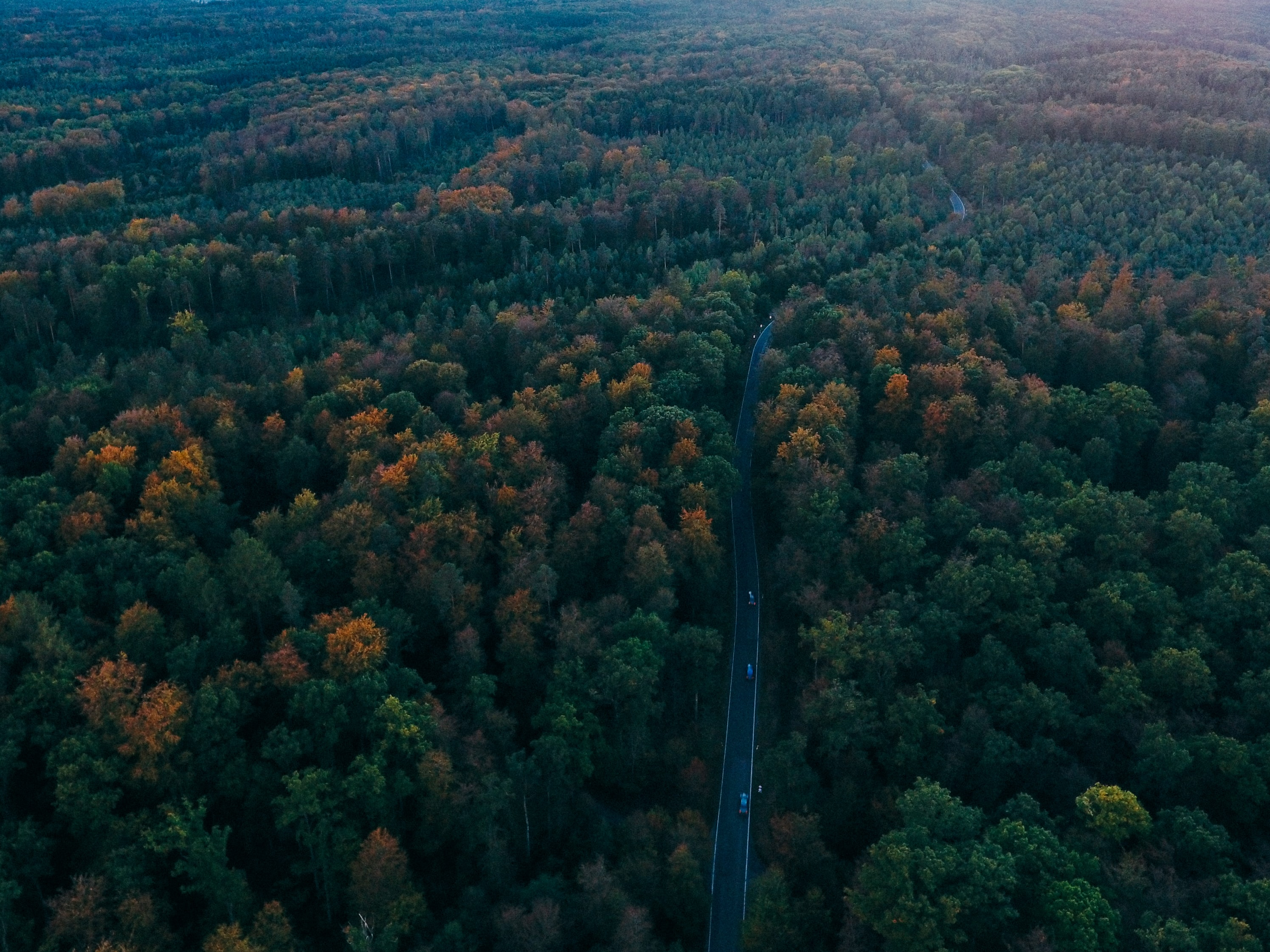 An aerial shot of a road surrounded by dense woods on both sides
