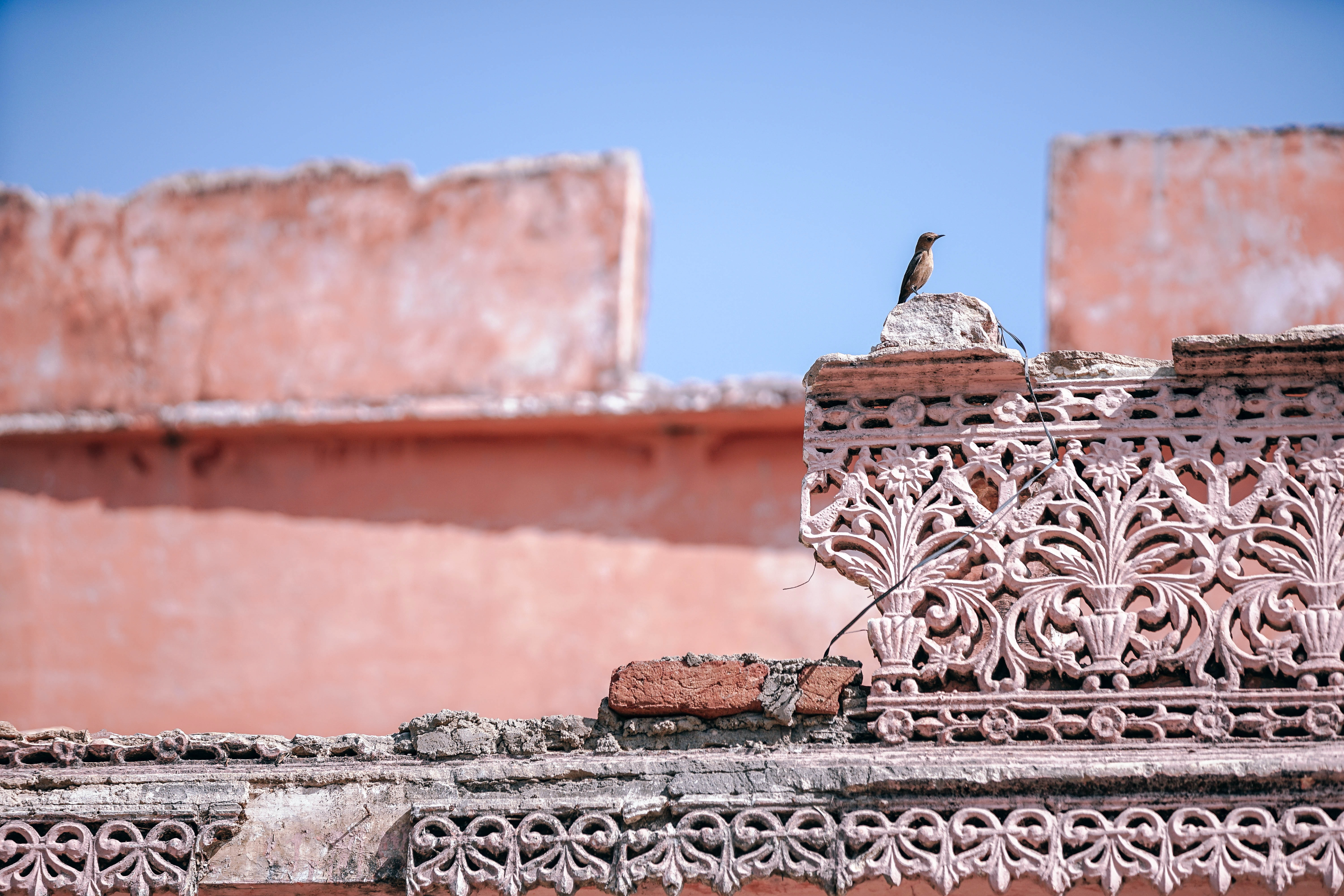 selective focus photography of bird perching on destroyed concrete block