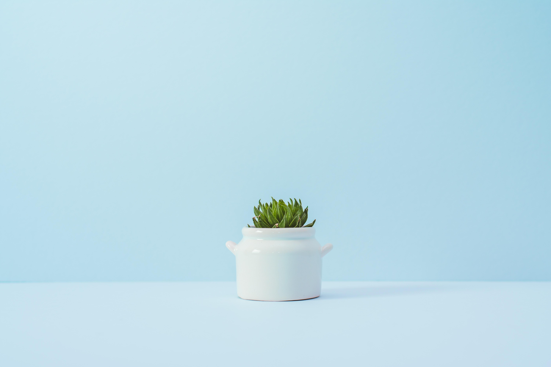 A succulent in a white ceramic pot against a blue wall