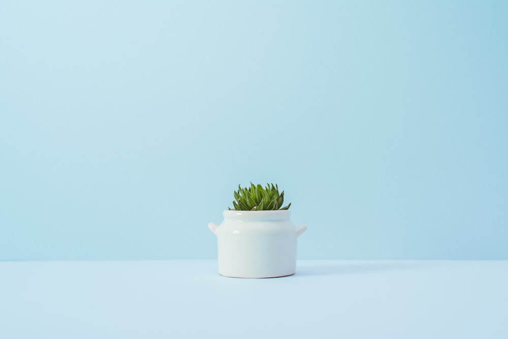 green succulent plant on white vase