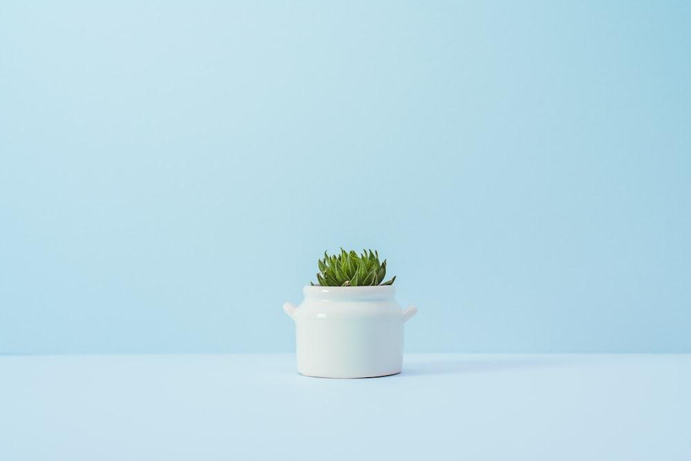 green succulent plant on white vase