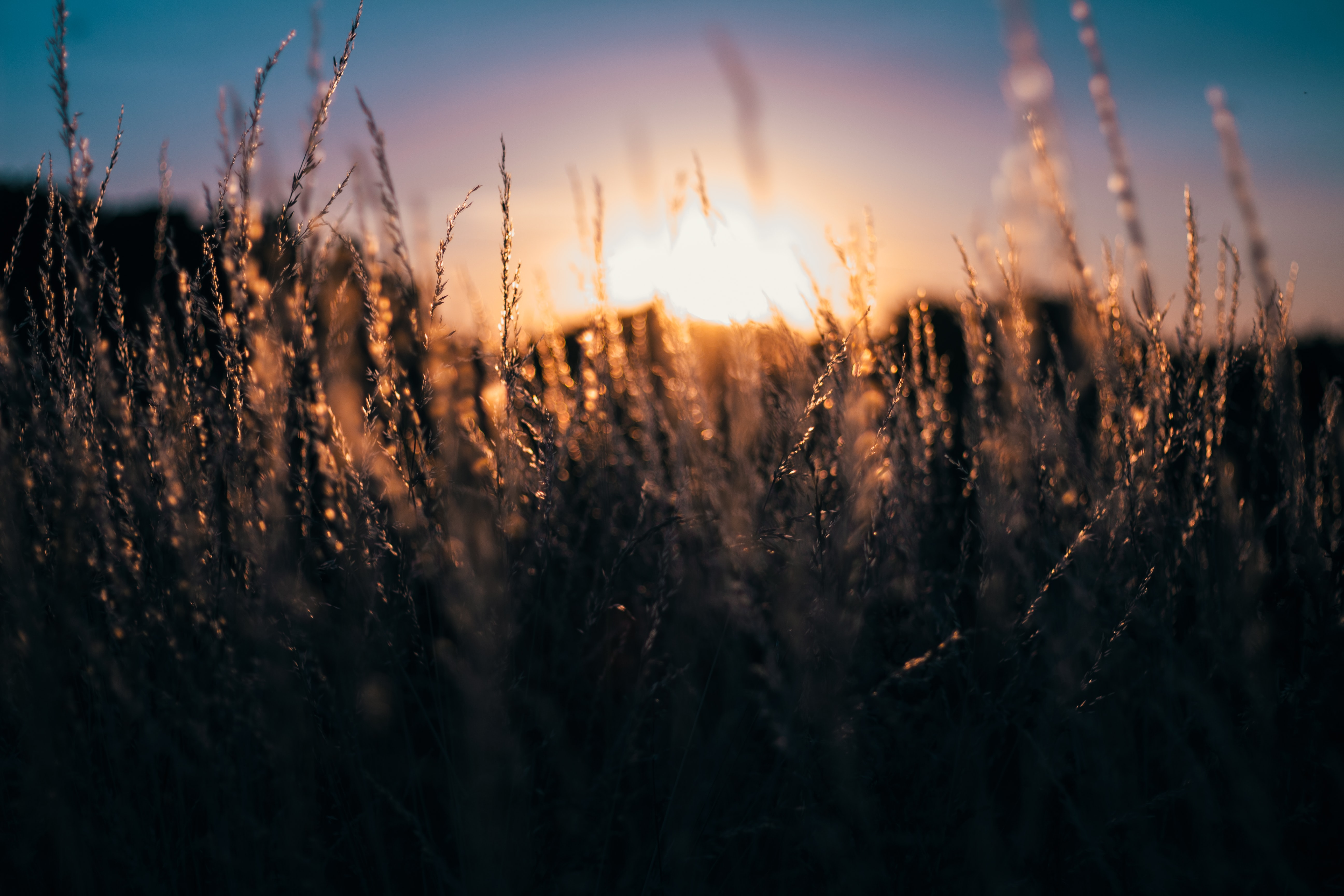 shallow depth of field photography of grass with sun
