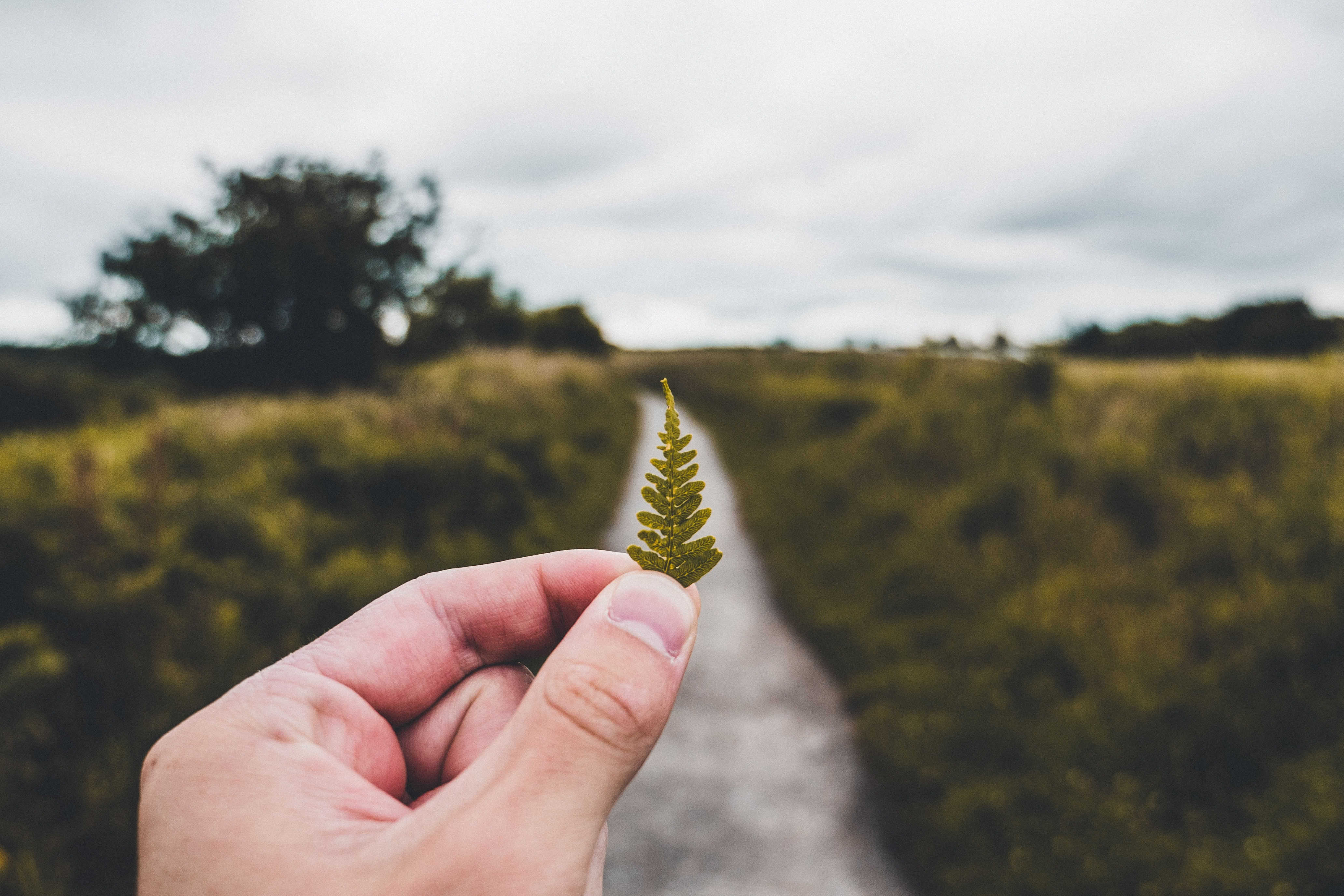 A person's hand holding up a tiny fern-like leaf against an empty path through a meadow