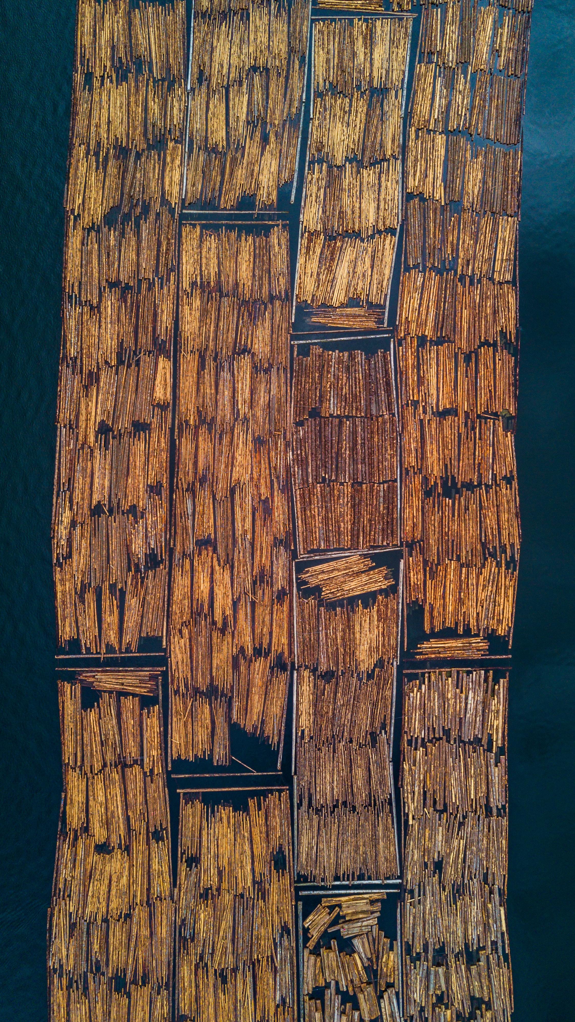 brown wood logs on body of water
