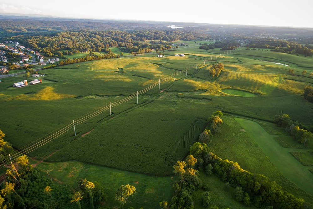 green plains with power lines surrounded by trees at daytime aerial photography
