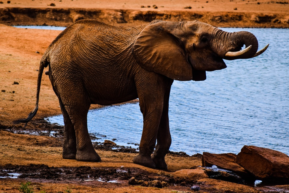 elephant near body of water during daytime