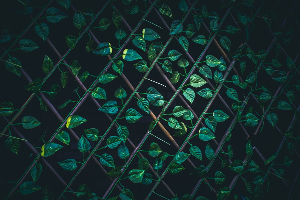 green leaves on brown wire fence macro photography