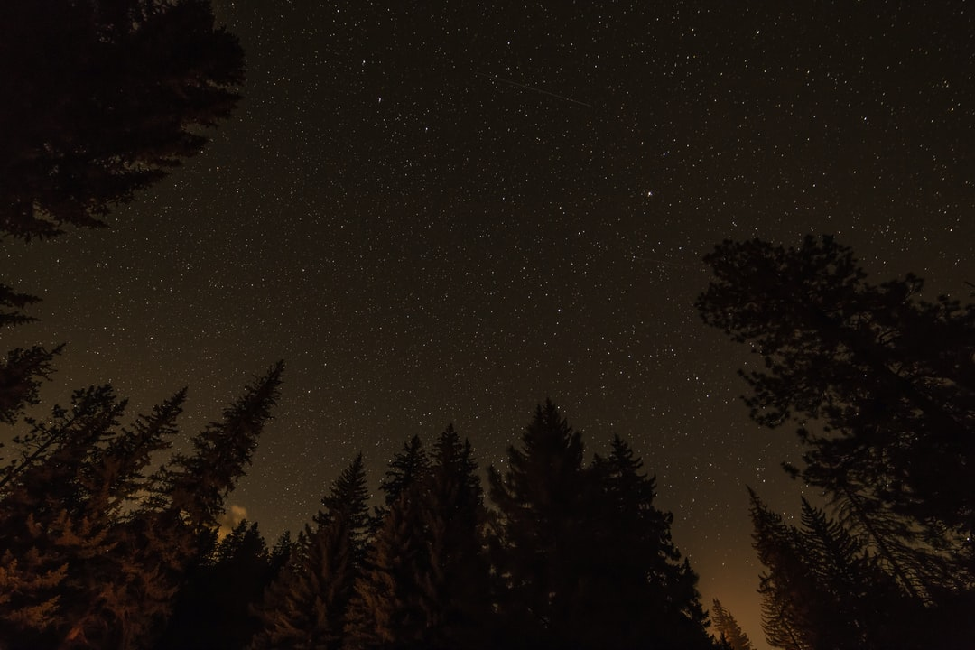 Stars over the woods