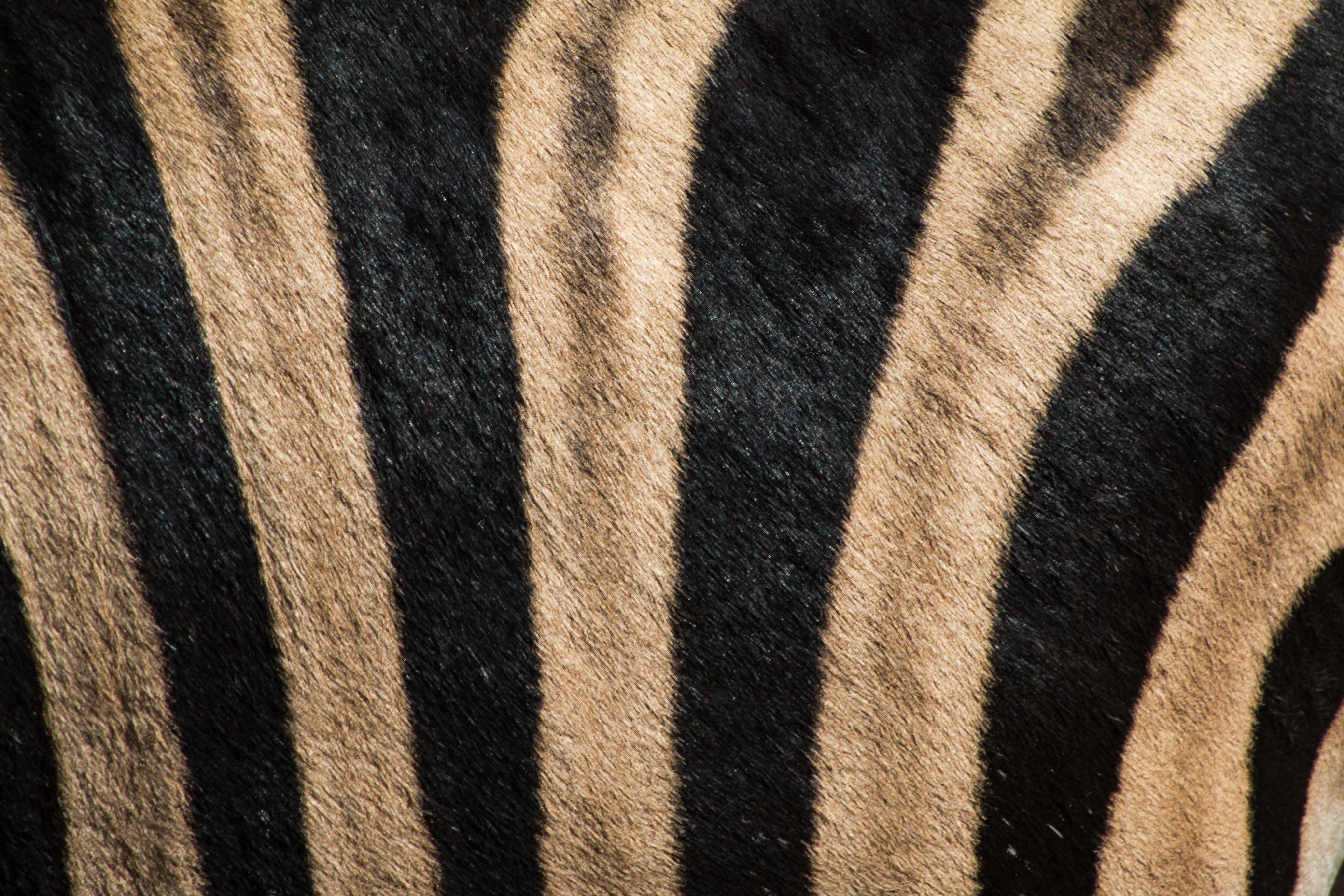 black and brown tiger-print fleece rug