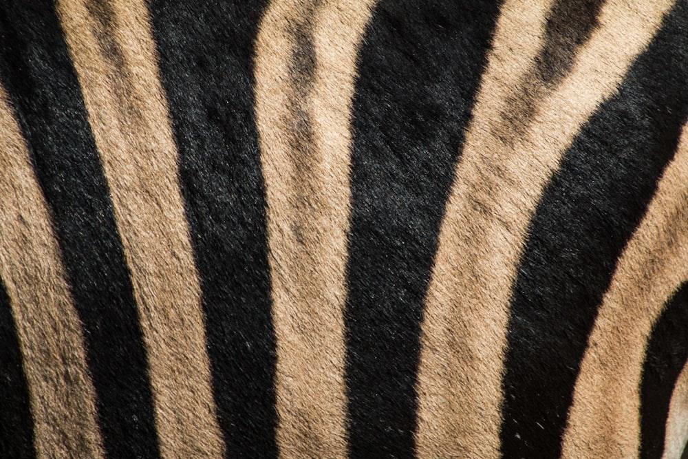 black and brown tiger-print fleece rug