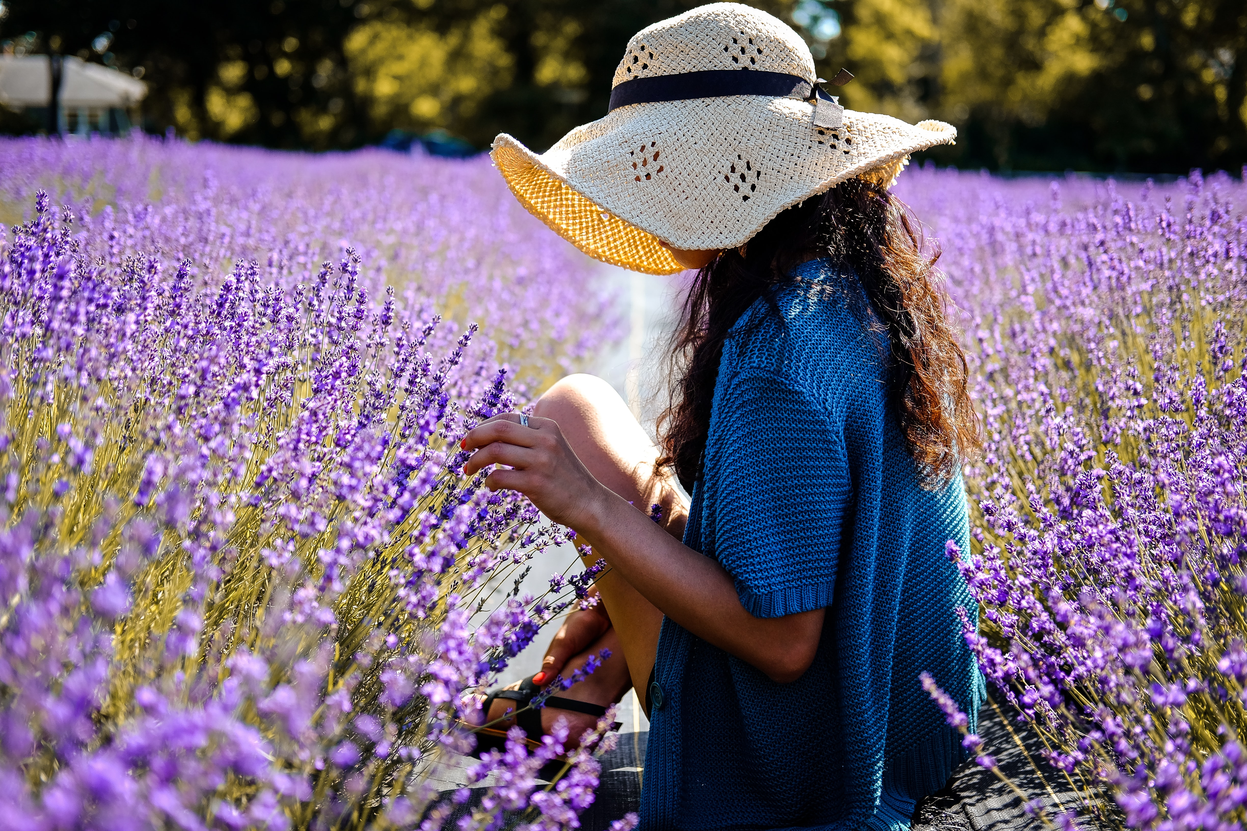 A woman with a hat covering her face sits among flowers at Lavender By the Bay
