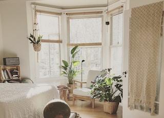 brown wooden framed white padded chair in between green indoor leaf plants inside bedroom