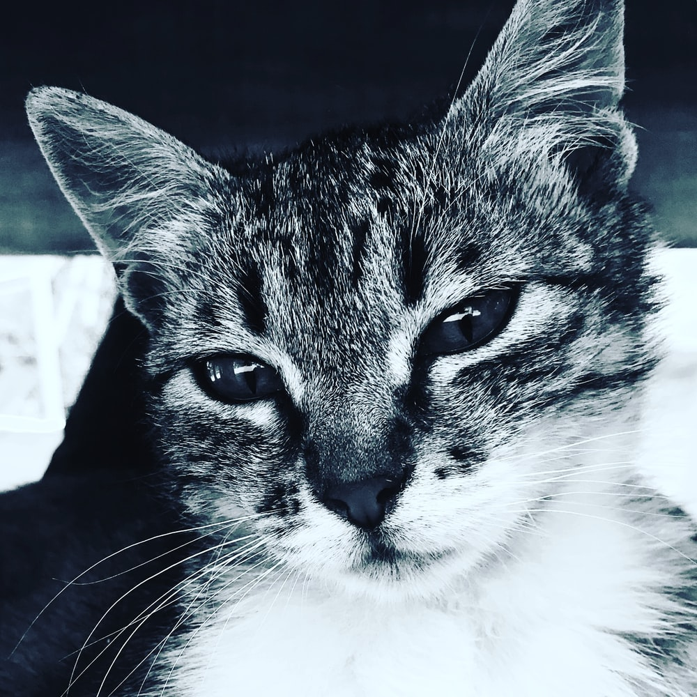 grey-scale photo of cat
