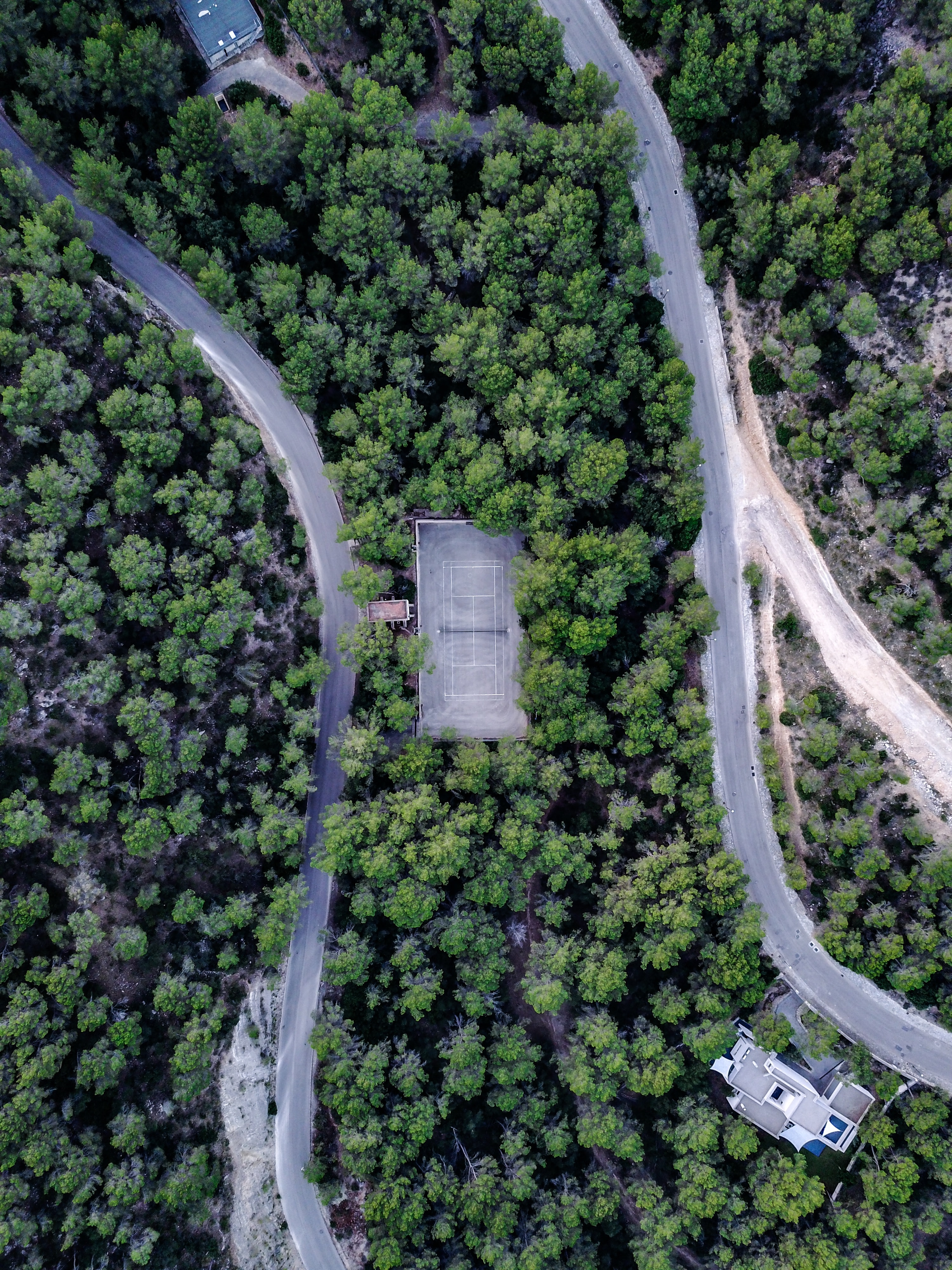 aerial view photography of green leaf trees and house