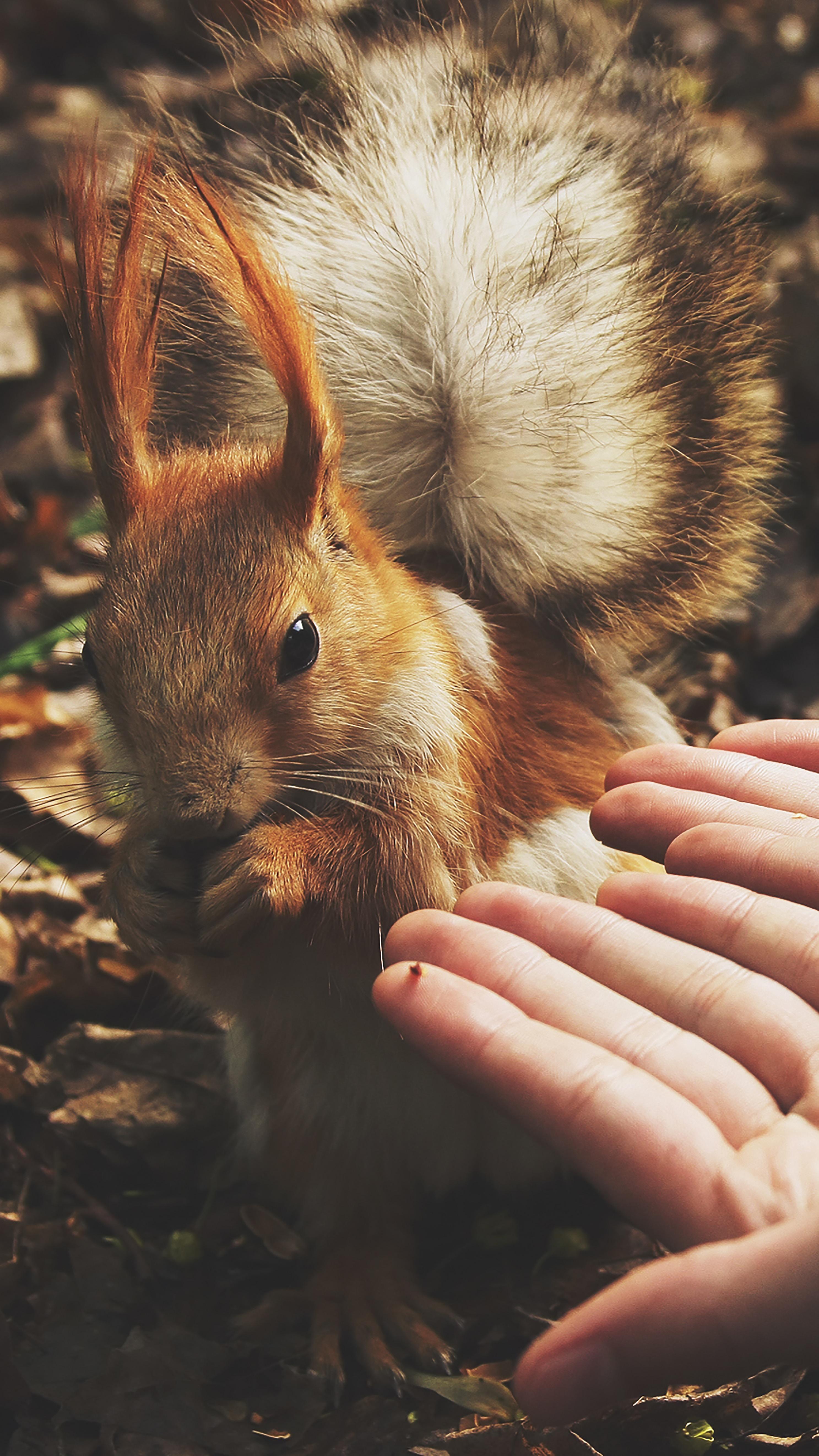 squirrel beside human hands