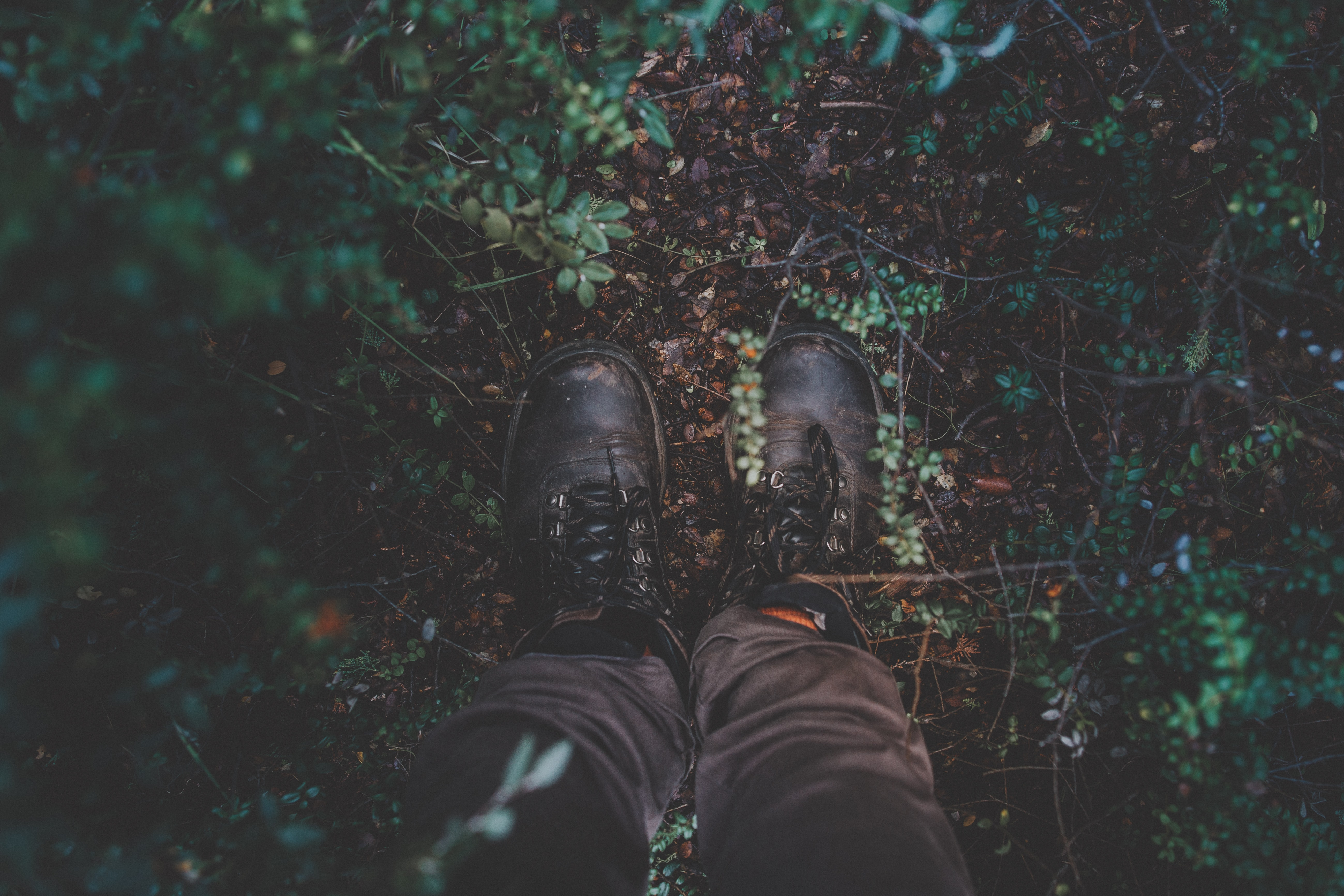 photography of black shoes surrounded by green leaves