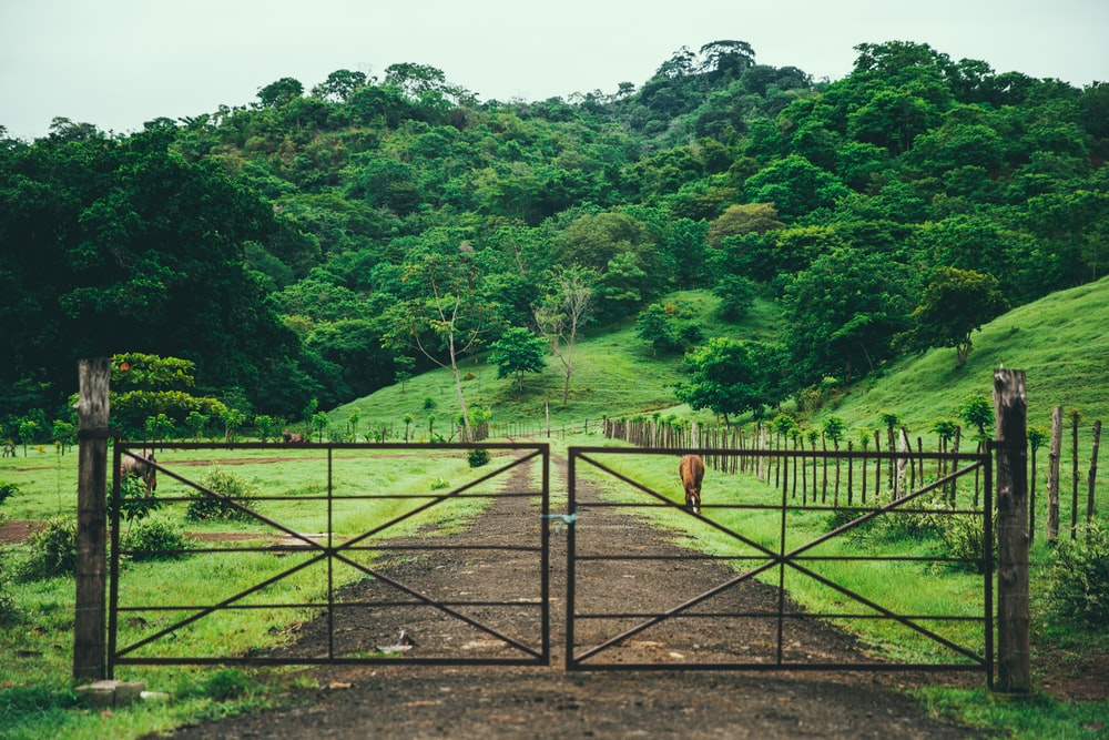 red wooden fence on green grass field