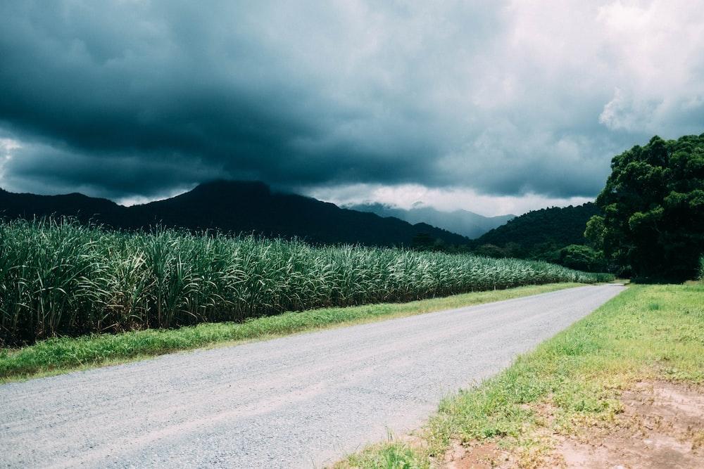 road near green fields