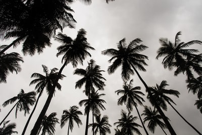 low angle photo of coconut trees during daytime liberia teams background